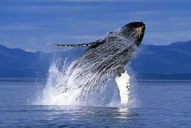 Proyecto de Ley – Santuario de mamíferos marinos