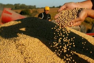 Proyecto de Ley – Ley de semillas y creaciones fitogéneticas