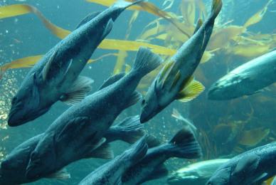 Proyecto de Resolución  – Expresar preocupación por proyecto de instalación salmónidos en canal de Beagle
